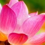 Florile numerologiei