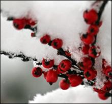 La ce ar fi indicat să vă gândiţi în luna Decembrie?