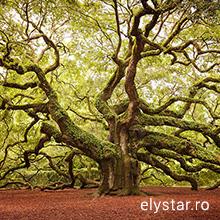 Dacă nu ești fericit unde te afli – mută-te! Nu ești un copac!